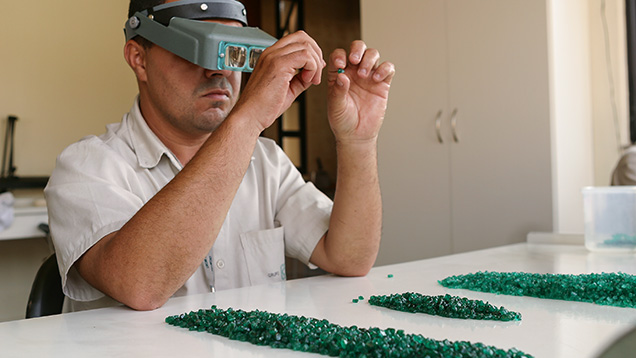 At their facility in Itabira, Belmont sorters sort the cobbed emerald rough into categories of size, shape, color, and clarity. Photo by Eric Welch/GIA.