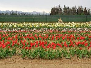 fioriranno 2018 campo di fiori