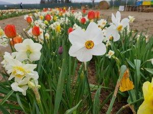 fioriranno 2018 fiore bianco