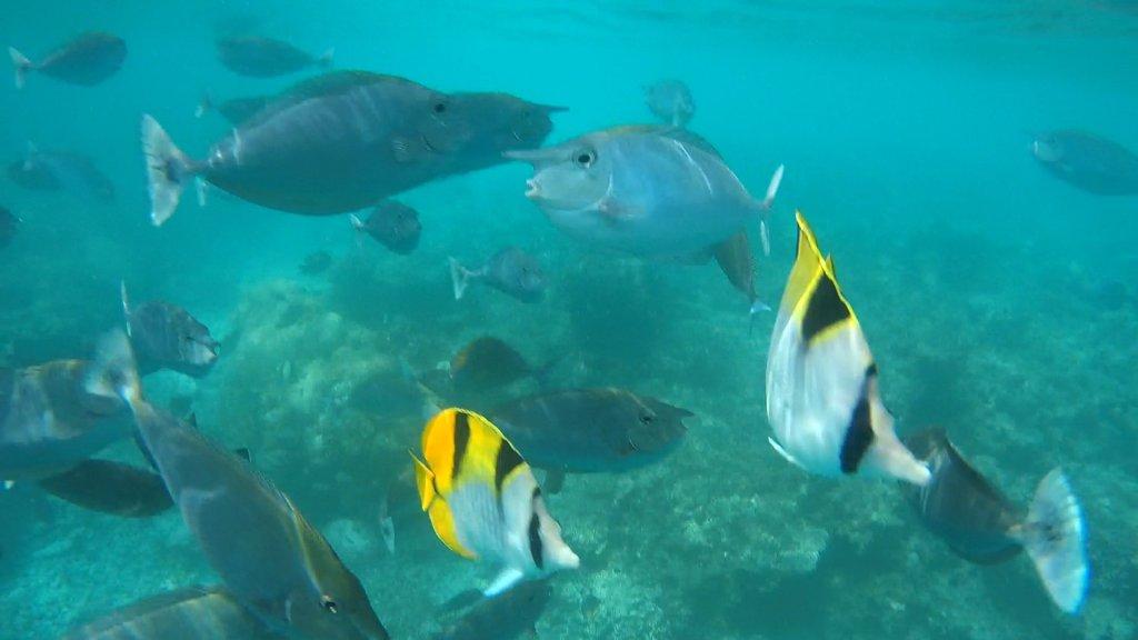 Tanti_pesci Maldive