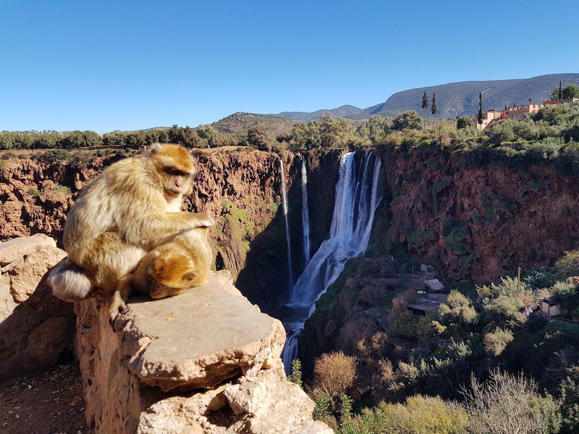 Le Cascate di Ouzoud - Viaggio in Marocco