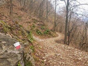 Sentiero della Rana Segnavia