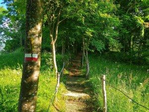 Scalinata sentiero 411 Val di Scalve