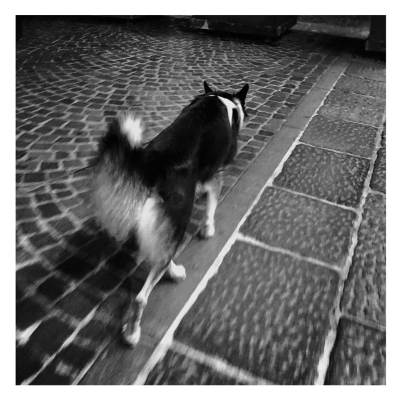 Un cane maestro di equilibrio solitario