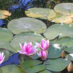 Le piante acquatiche