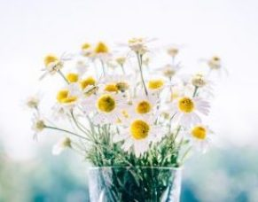 bouquet per san valentino margherite