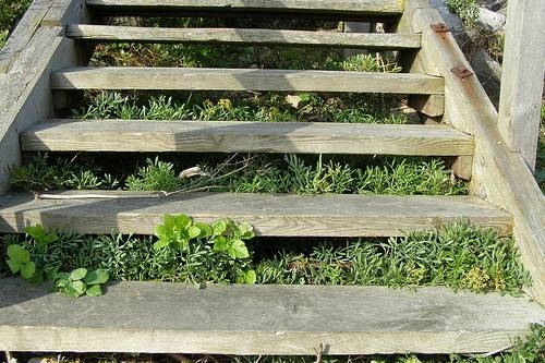 Idee originali per il giardino giardini nel mondo - Idee originali per giardini ...