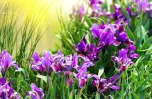 significato fiori
