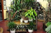 curare le piante in vaso in inverno ft evidenza