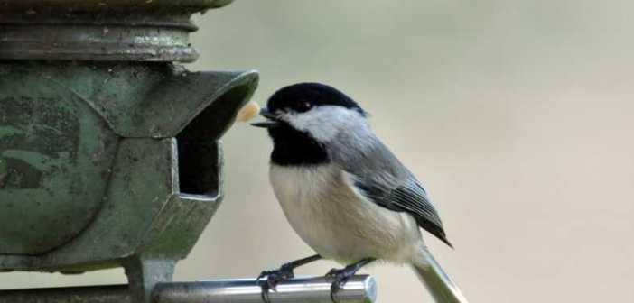 Come creare nidi per uccelli selvatici