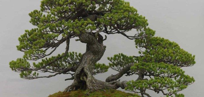 Tutti i consigli per curare il tuo bonsai