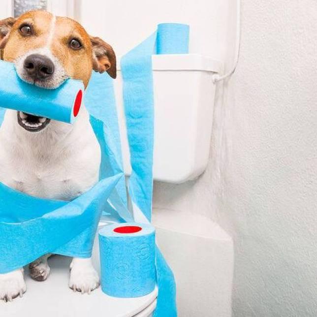 bigstock-Dog-On-Toilet-Seat-136070339