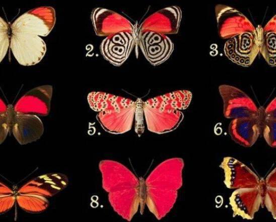 ΤΕΣΤ : Η πεταλούδα που θα διαλέξεις, αποκαλύπτει τα συναισθήματα και τις σκέψεις που κρύβεις μέσα σου…!!!