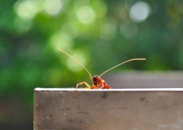 2 τρόποι να διώξετε τις κατσαρίδες από το σπίτι!!!