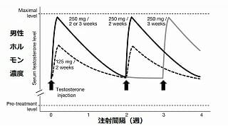 男性ホルモン注射間隔の薬物動態
