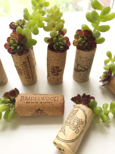 wine corks with succulents