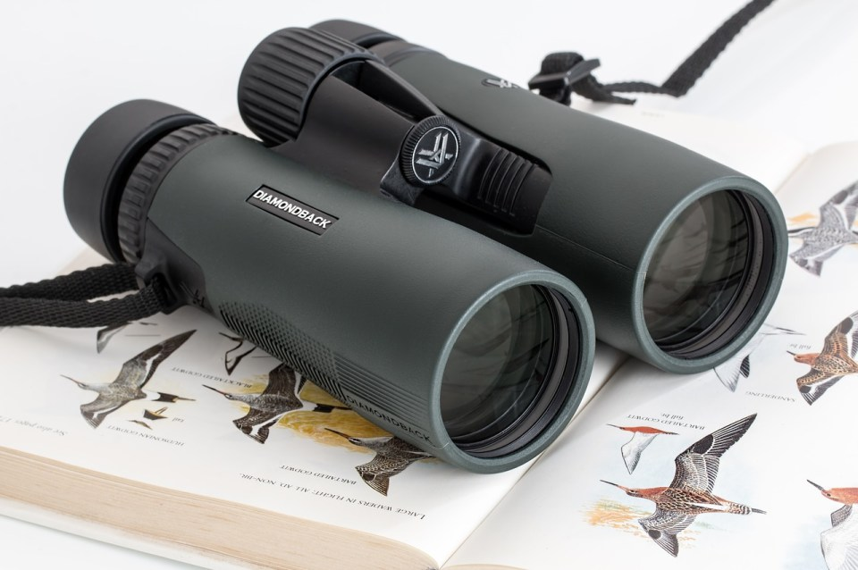 binoculars, birdwatching, spy glass