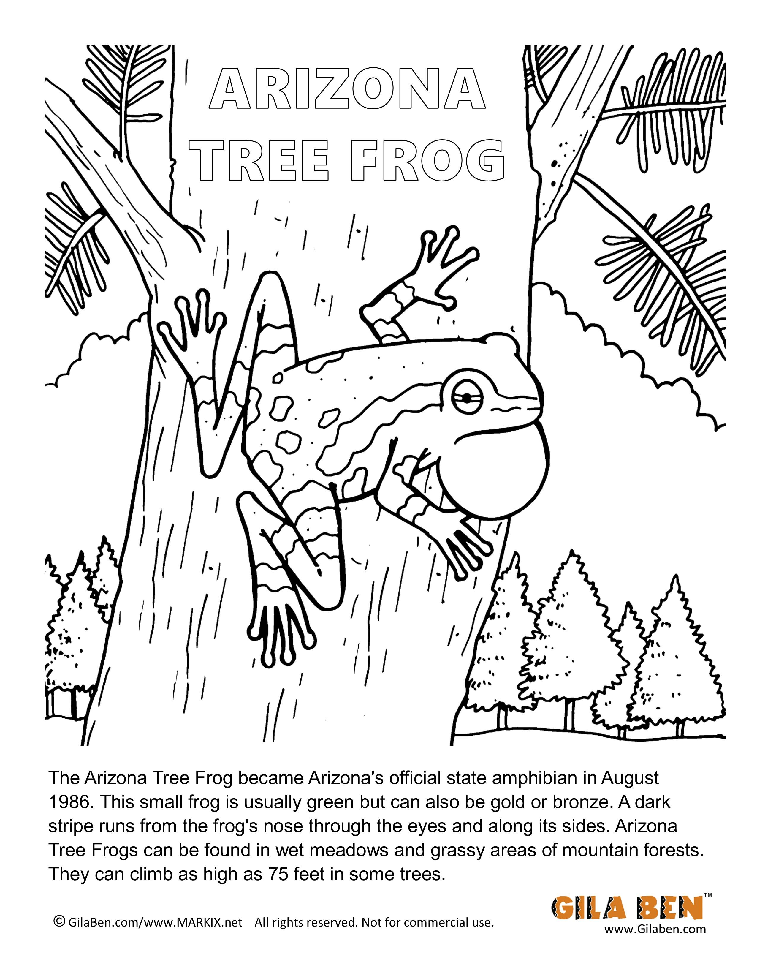 Arizona State Amphibian Arizona Tree Frog Coloring Page