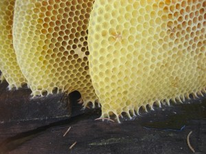 Waxworms typically eat beeswax, which has a similar structure to plastic