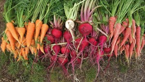 Plant now Zone Ten, and this is your harvest in a few short months.