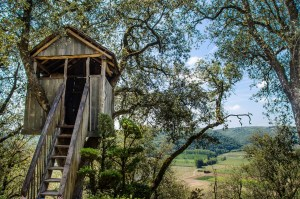 Choose rustic or luxury tree houses AirBnB