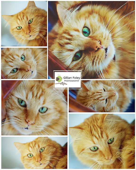 Another cat post | Gillian Foley Photography
