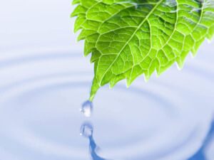Leaf touches water | technology carbon footprint