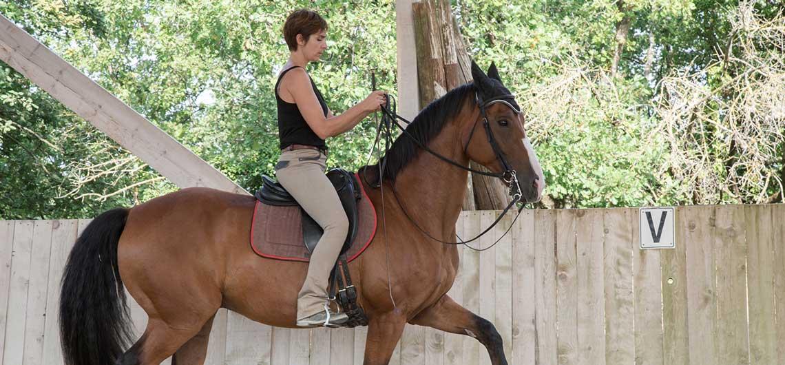 Equitation de Légèreté - La tradition française