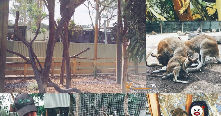 雪梨一日團》Featherdale 野生動物園 袋鼠、無尾熊一次滿足(可以免費跟無尾熊拍照哦!)