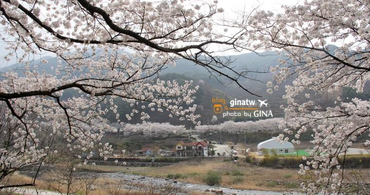 韓國釜山賞櫻》河東十里櫻花路很壯觀! 洛東江大渚生態公園一帶美美夜櫻