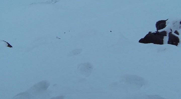 Snowmobile_eisbären abdrücke