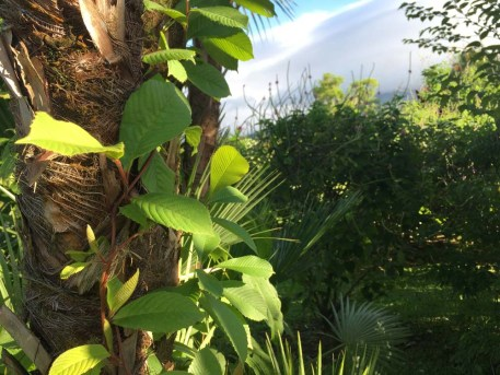 Gartenanlage Hotel Volcano Lodge Springs Costa Rica www.gindeslebens.com
