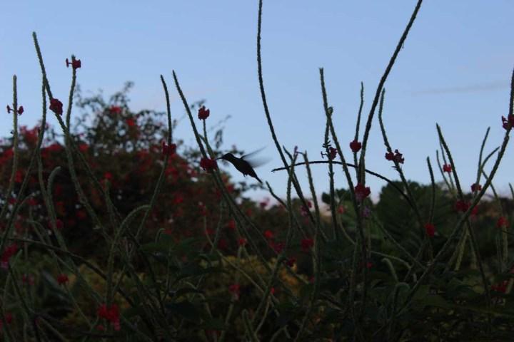 Kolibri La Fortuna Costa Rica www.gindeslebens.com