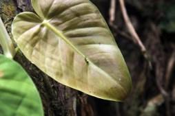 Insekt Almonds and Corals Costa Rica www.gindeslebens.com