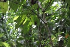 Ecocentro Danaus www.gindeslebens.com