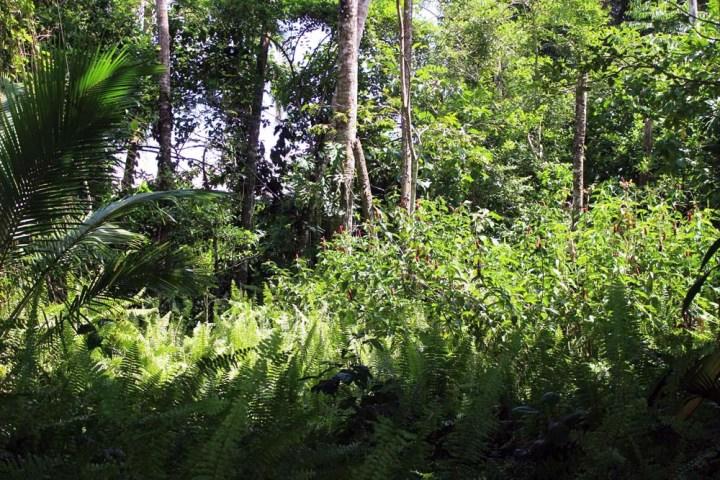Dschungel Nationalpark Cahuita Costa Rica www.gindeslebens.com