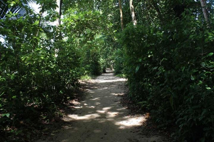 Weg Nationalpark Cahuita Costa Rica www.gindeslebens.com