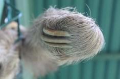 Faultierpfote Sloth Sanctuary Costa Rica www.gindeslebens.com