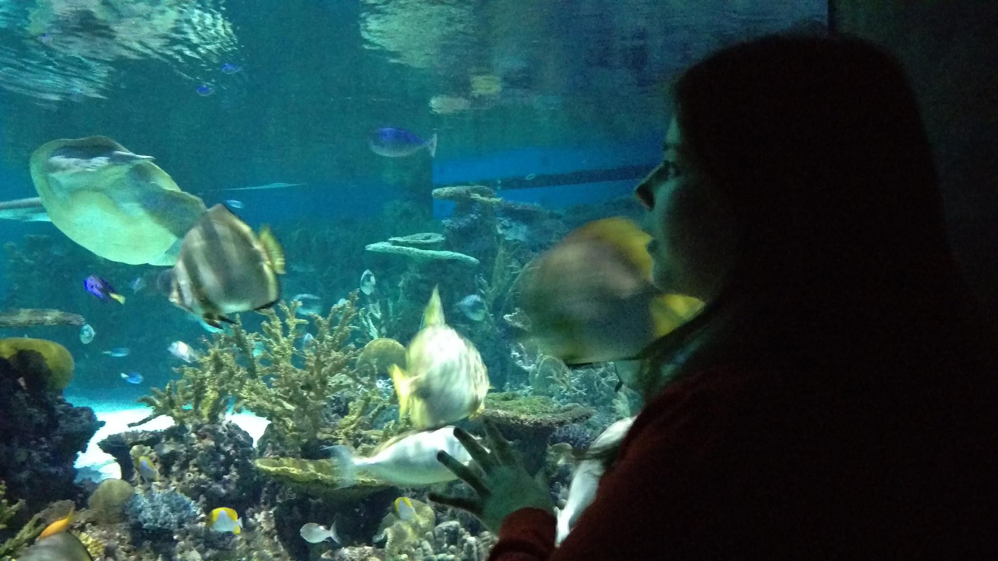 The National Aquarium in Baltimore!