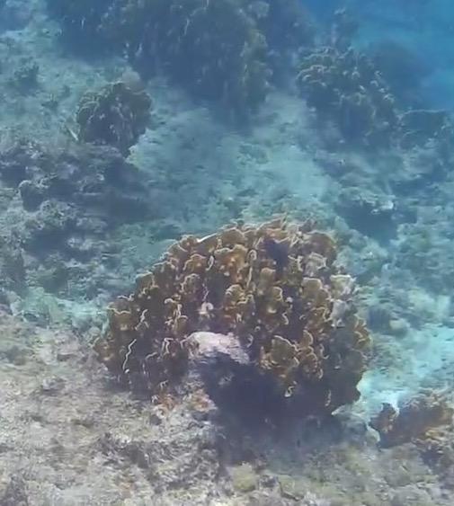 reef-barbados