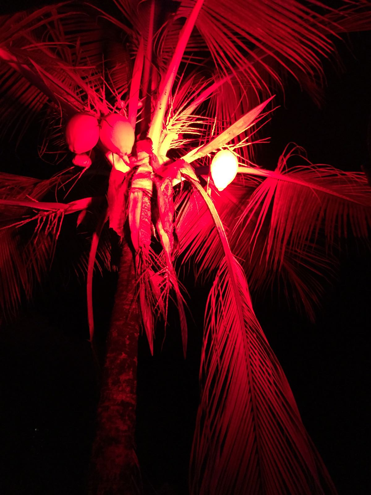 old-jamm-inn-red-palm-trees