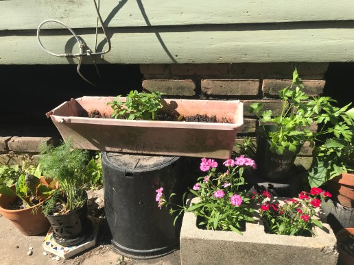 My son's personal garden