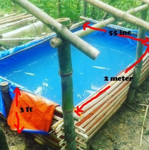 koi breeding bamboo trapal koi pond