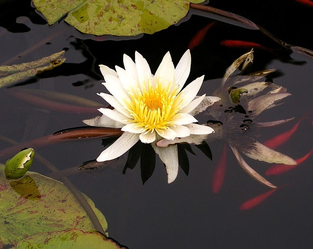 koi pond water features