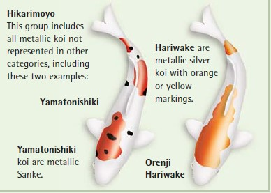 koi fish color meaning chart