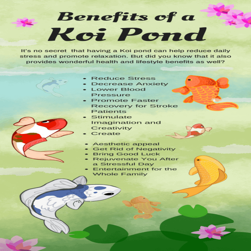 koi fish benefits of a koi pond in health