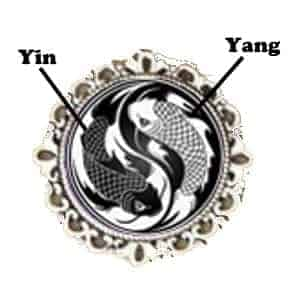 koi fish yin yang