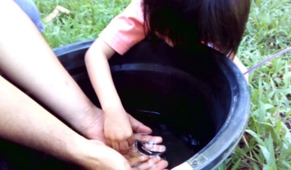 Ways to Encourage Your Kids to Take Care of Their Koi