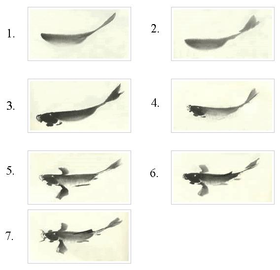 koi art chinese calligraphy step by step koi fish painting