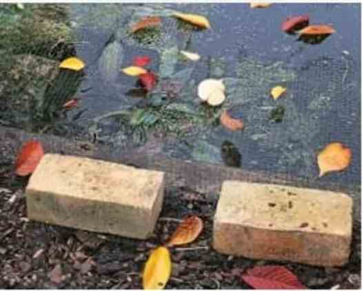 pond maintenance removing leaves